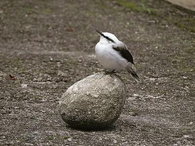 pássaro na pedra